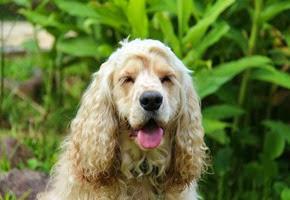 Dogs Trekking 6 (7_1) (32)