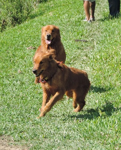 Dogs Trekking 6 (63)