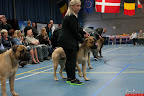 20130510-Bullmastiff-Worldcup-1148.jpg
