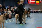 20130510-Bullmastiff-Worldcup-1148.jpg