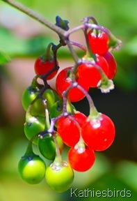 3. berries-kab