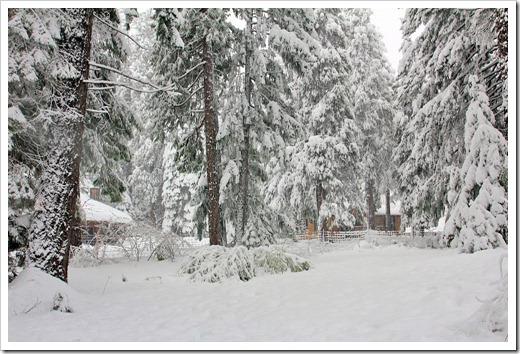 121223_snow_050