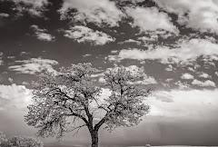 zero-dean-photography-the-last-tree-square.jpg