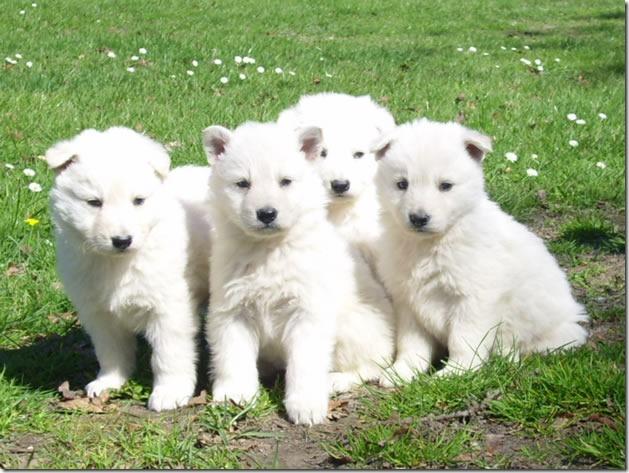fotos de perritos imagenesifotos.blogspot (14)