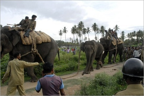 India Elephant Rampage 04