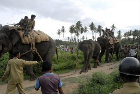 India Elephant Rampage 04