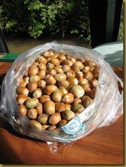 IMG_0020 Hazelnuts