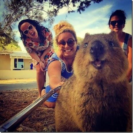 selfies-australian-quokka-001