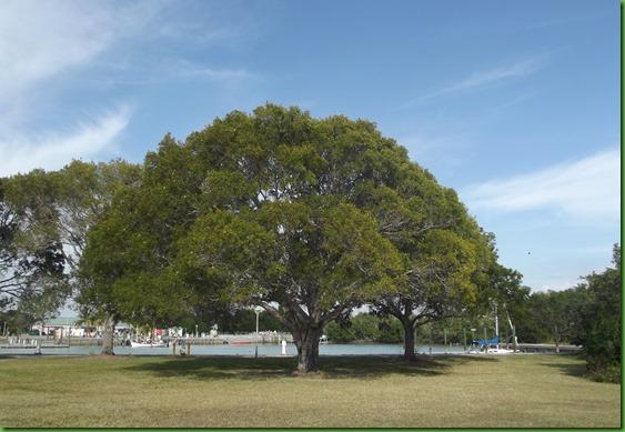 PM Everglades (31)