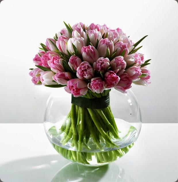 tulips img the black rose uk