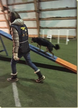 150310 Liisa agility 1