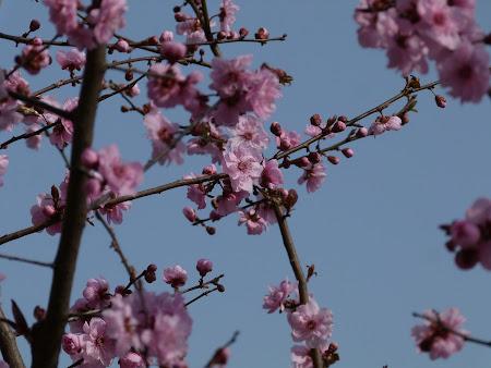 18. Flori de prun.JPG