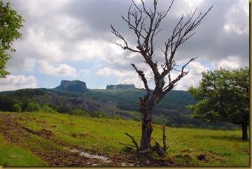 albero secco e i Sassi