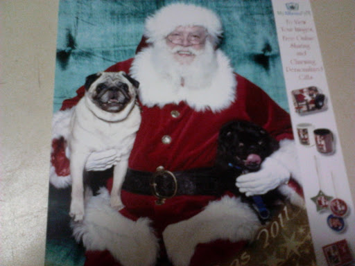 Tracy L. also brought her pugs, Milo and Frankie, to sit with Santa.