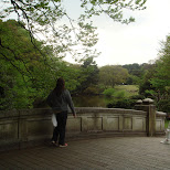 a bridge in yoyogi park in Yoyogi, Tokyo, Japan