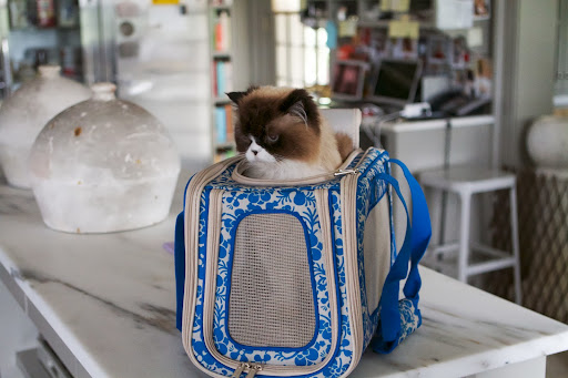 We thought we'd take Vivaldi with us.  He really liked the Folding Pet Carrier.