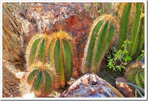 131203_TucsonBotanicalGarden_083