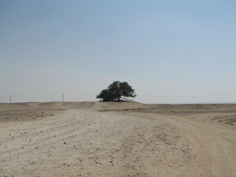 tree-of-life-8