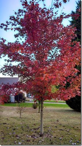 Fall (4)