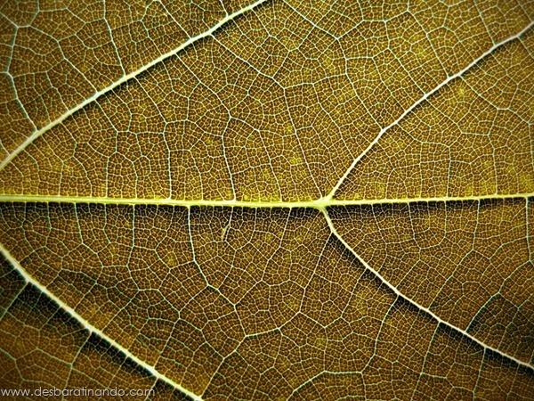 natureze-nature-padrao-pattern-desbaratinando (3)