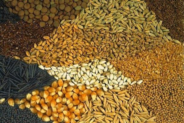 Πρώτη νίκη των πολιτών στον πόλεμο ενάντια στον έλεγχο της τροφής από τις πολυεθνικές
