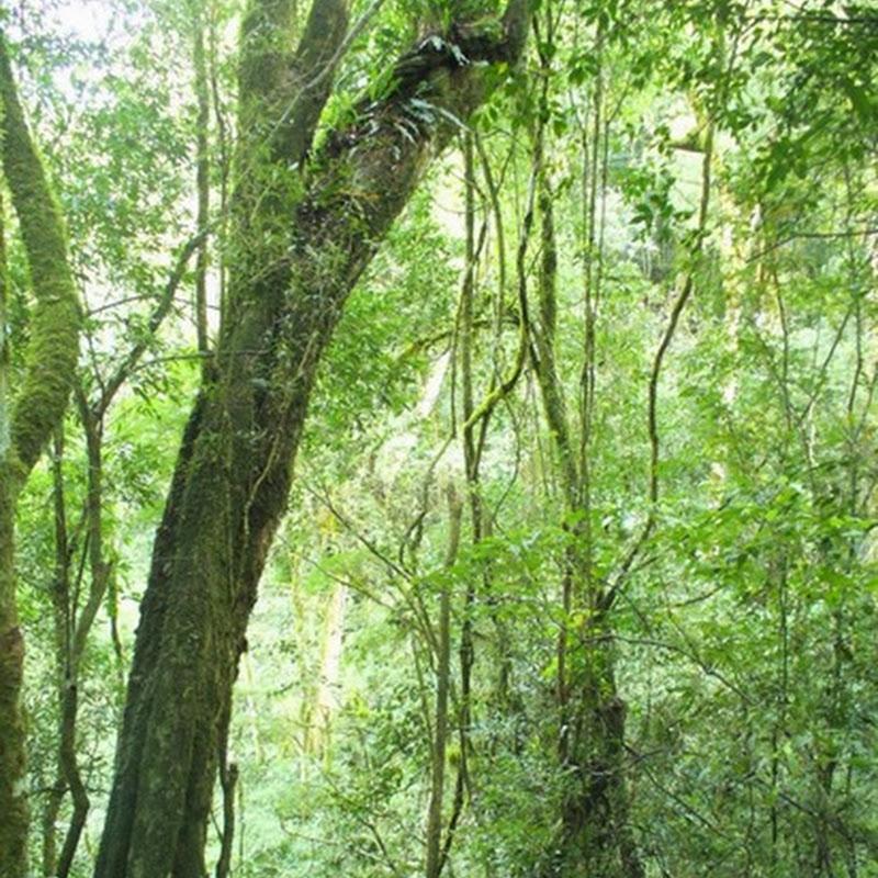 Parque Provincial Cruce Caballero, 430 hectáreas para preservar este ambiente natural.