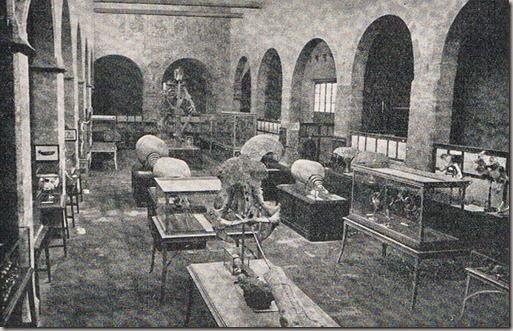 Antiguo Museo Paleontologico. Anos 50