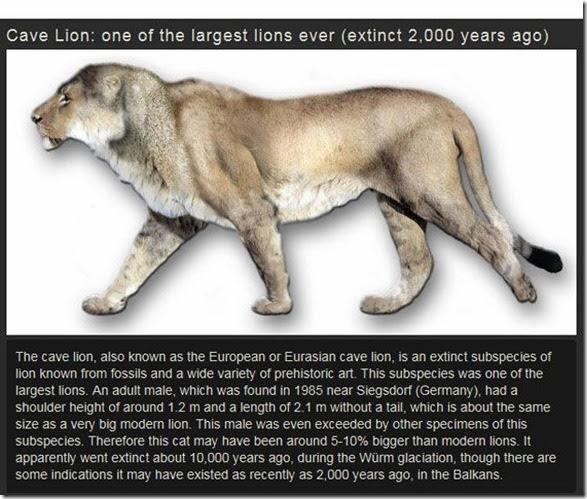extinct-animals-009