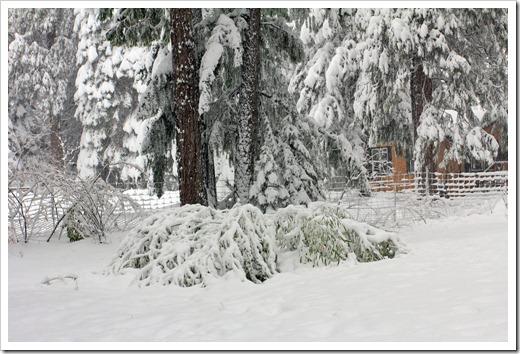 121223_snow_044
