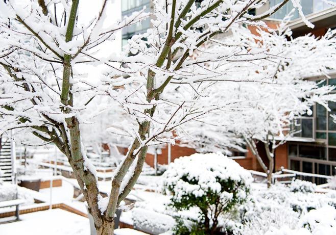 Snow on Sunday-4941