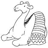 camello7.jpg