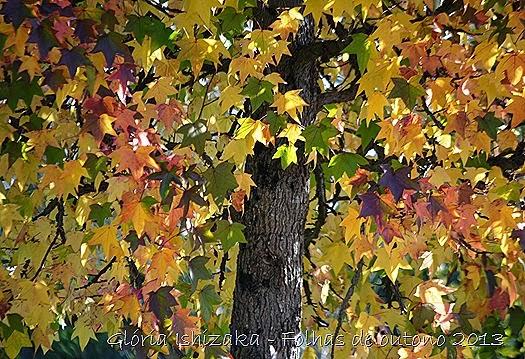 11  Glória Ishizaka - Folhas de Outono 2013