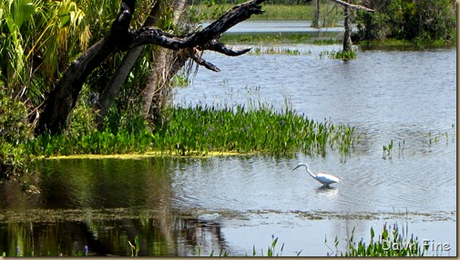 OrlandoWetlands_183