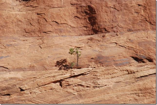 04-26-13 A Canyon de Chelly White House Trail 068