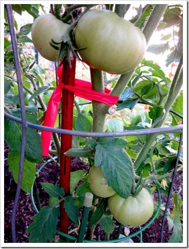 tomatiez