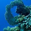 koral_33.jpg