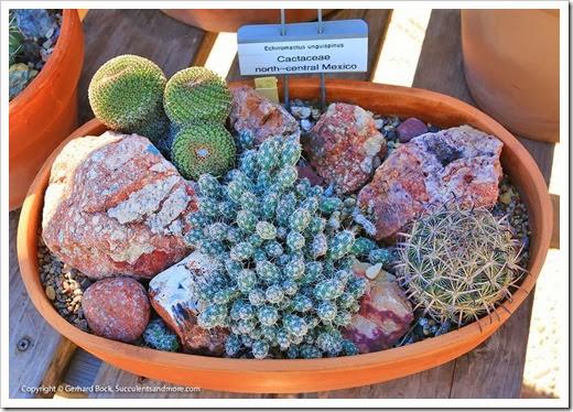131203_TucsonBotanicalGarden_039