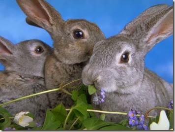 guida coniglio