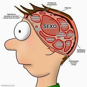 cerebro-masculino