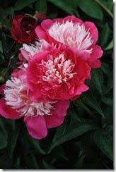 nybg-new-york-botanic-gardens-bronx-027