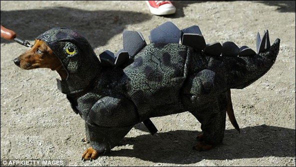 A non-too smiley dog dresses as a stegosaurus