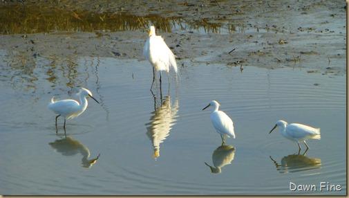 Huntington Beach State Park_080