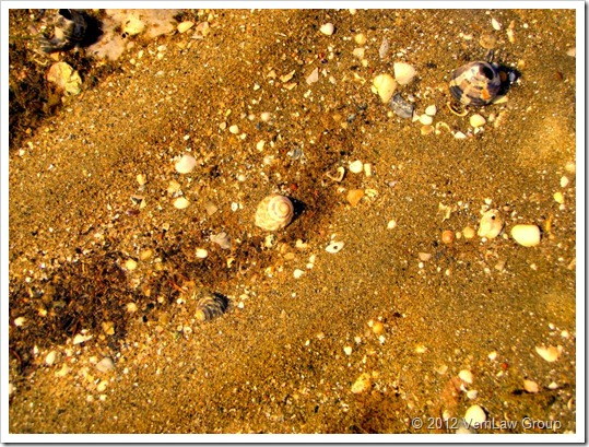 SeashellsP7100381