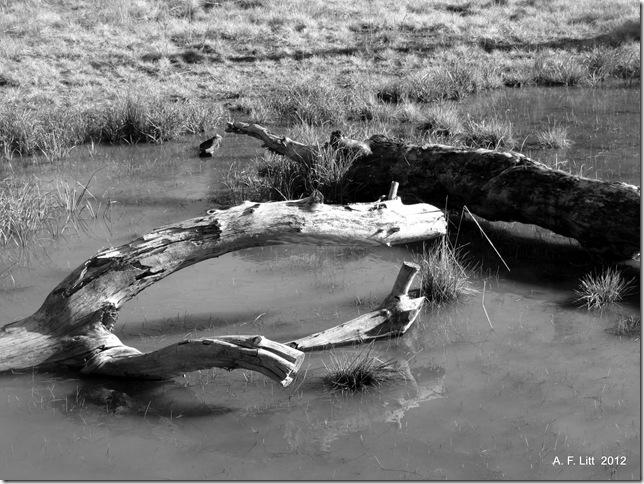 Dead Wood.  Springwater Corridor.  February 6, 2012.