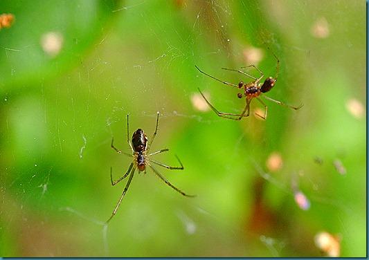 hämähäkit 102