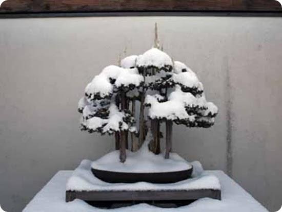 bonsai_page_4