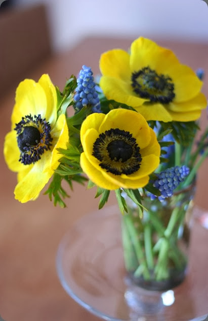 muscari artificially colored yellow_anemones madame-love dot com