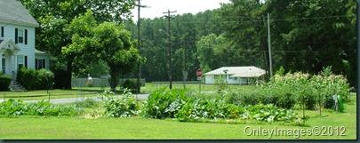 garden overall 0628