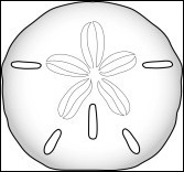sand dollar outline