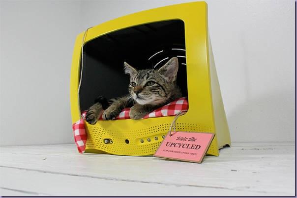 Televisão-Cama-Gato
